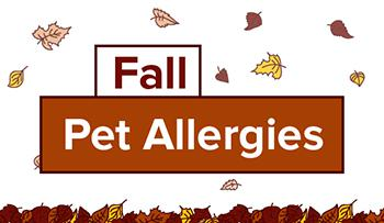 Fall Pet Allergies Infographic